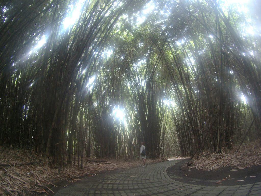 hutan bambu traveling bali