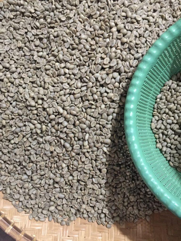 green beans kopi toraja sapan